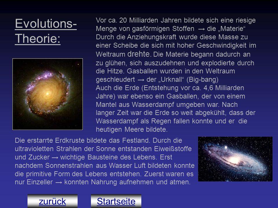 Evolutions-Theorie: zurück Startseite