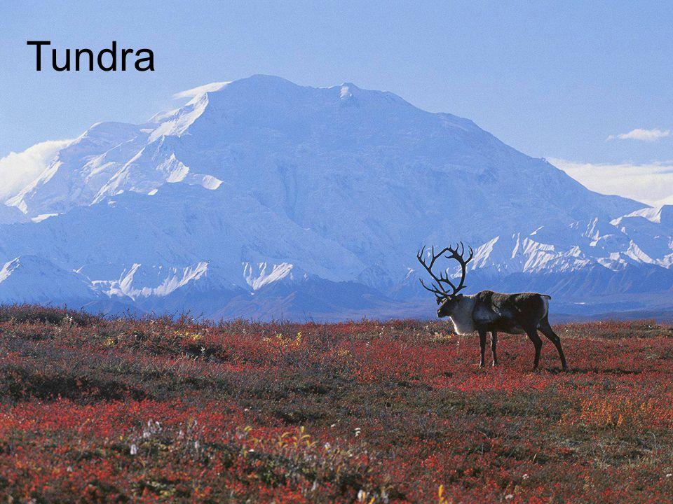 Tundra Tundra (auch Kältesteppe)