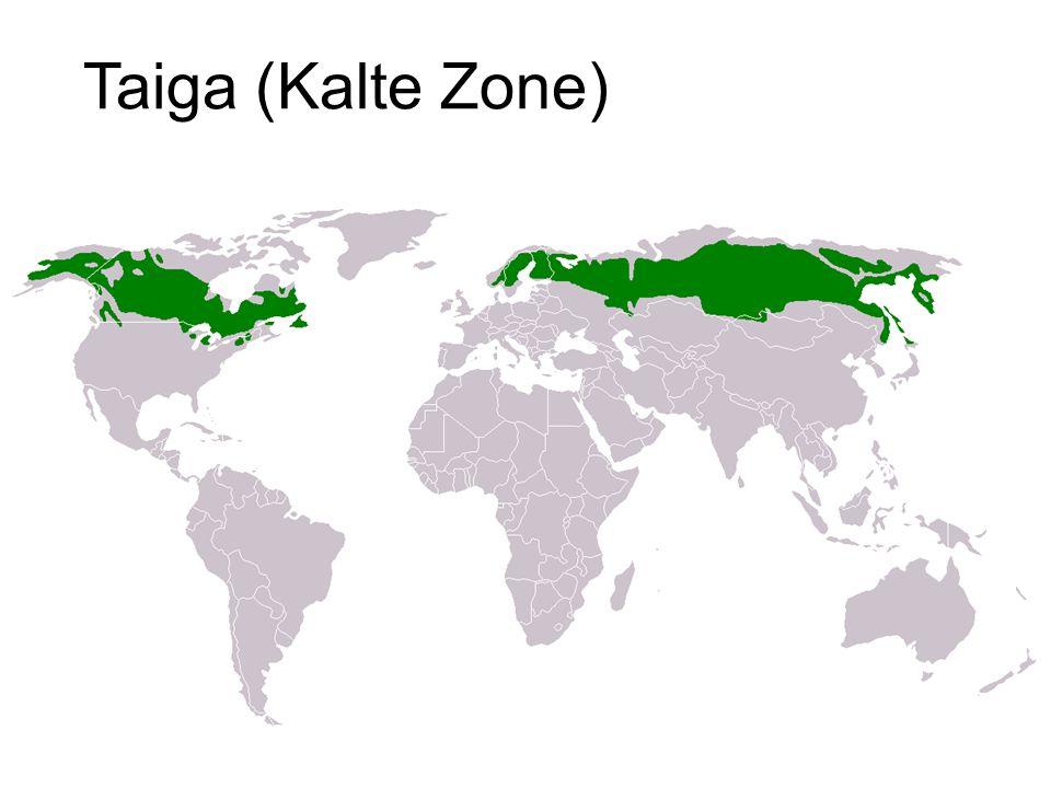 Taiga (Kalte Zone)
