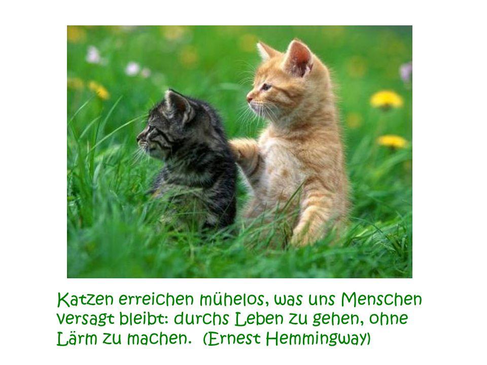 Katzen erreichen mühelos, was uns Menschen