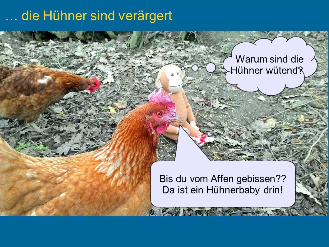 … die Hühner sind verärgert