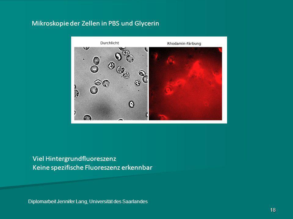 Mikroskopie der Zellen in PBS und Glycerin