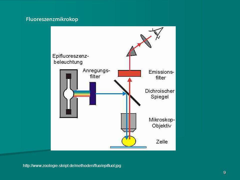 Fluoreszenzmikrokop http://www.zoologie-skript.de/methoden/fluo/epifluol.jpg 9