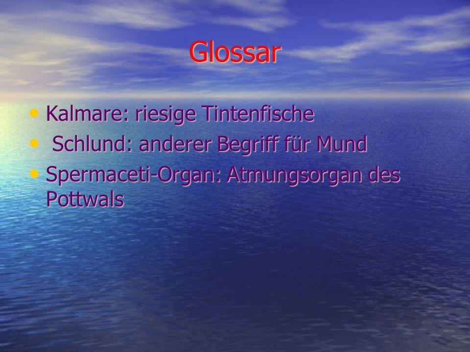 Glossar Kalmare: riesige Tintenfische