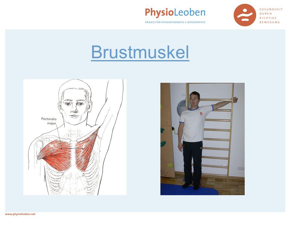Brustmuskel