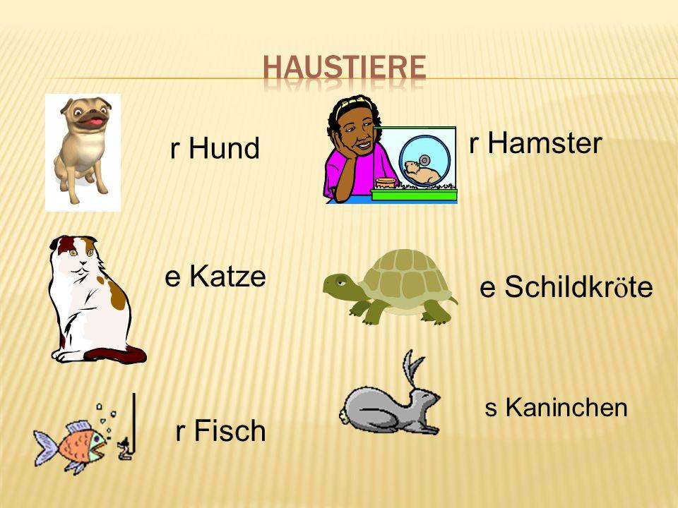 Haustiere r Hamster r Hund e Katze e Schildkröte s Kaninchen r Fisch