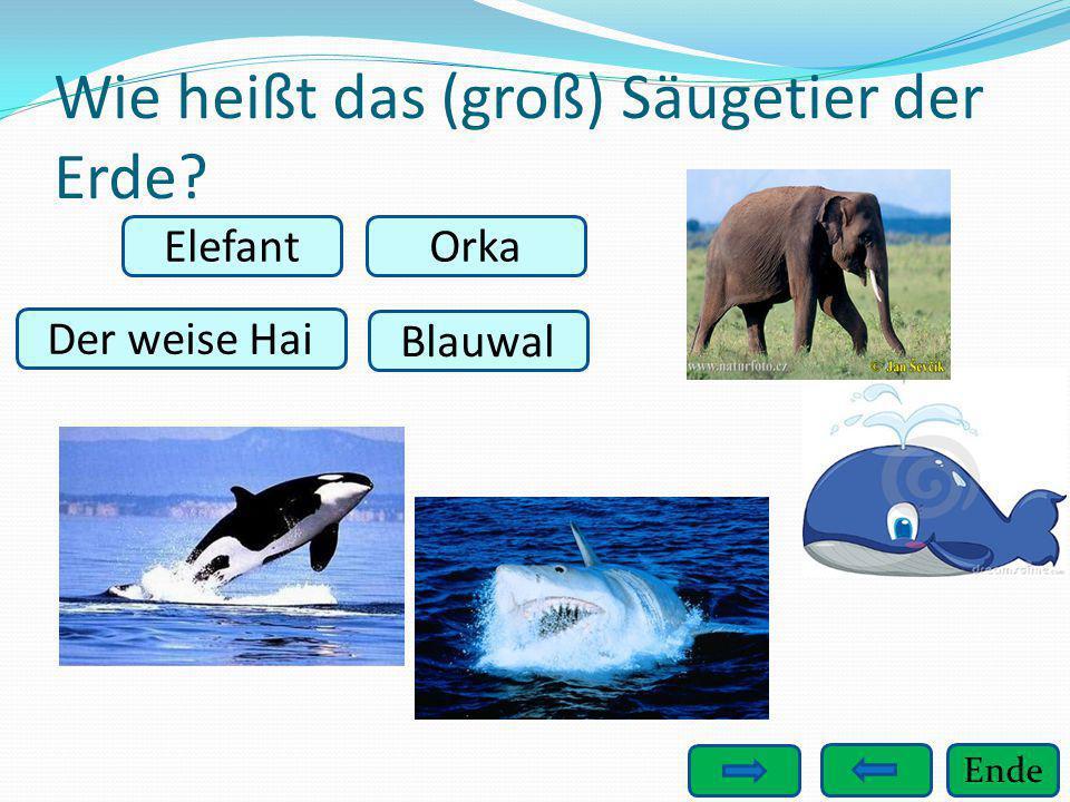 Wie heißt das (groß) Säugetier der Erde