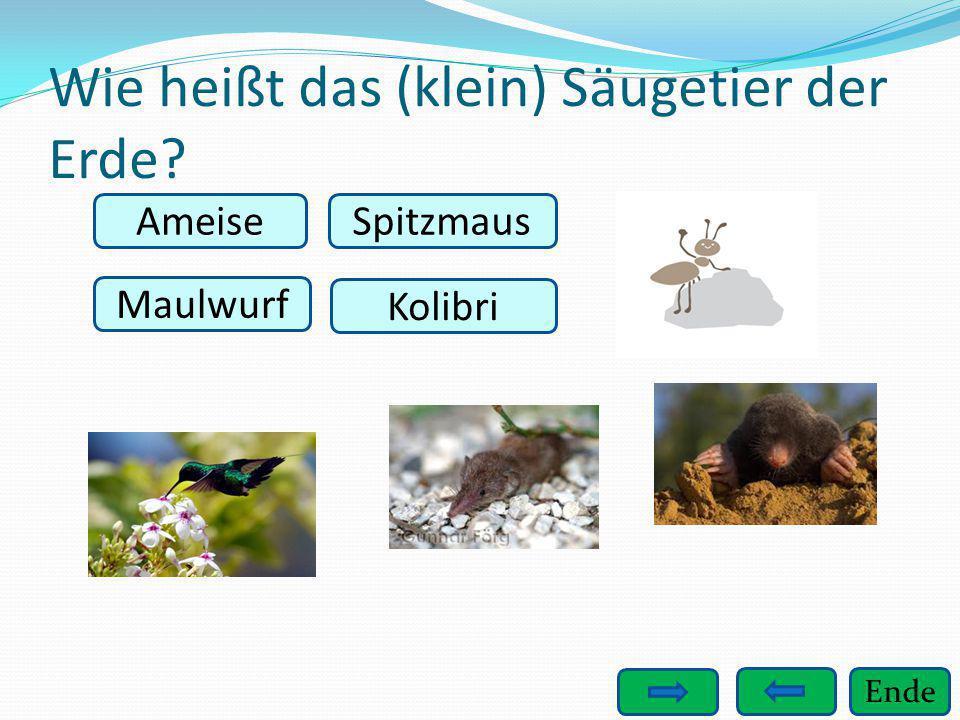 Wie heißt das (klein) Säugetier der Erde