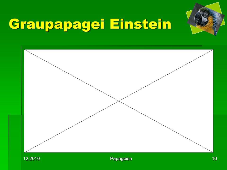 Graupapagei Einstein 12.2010 Papageien