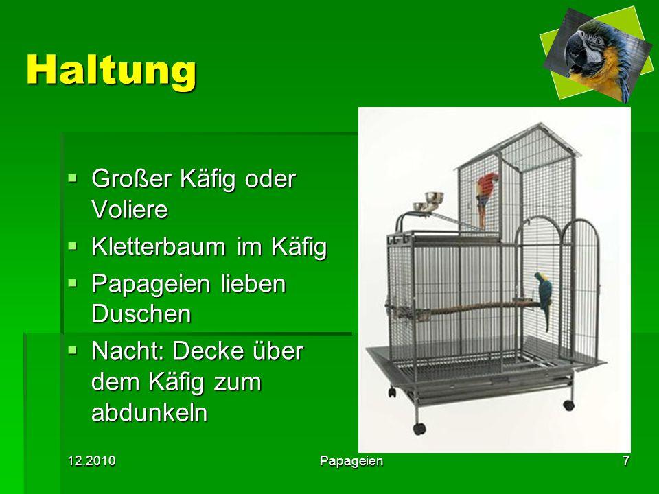 Haltung Großer Käfig oder Voliere Kletterbaum im Käfig