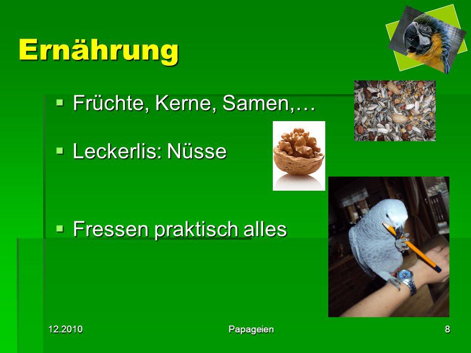 Ernährung Früchte, Kerne, Samen,… Leckerlis: Nüsse