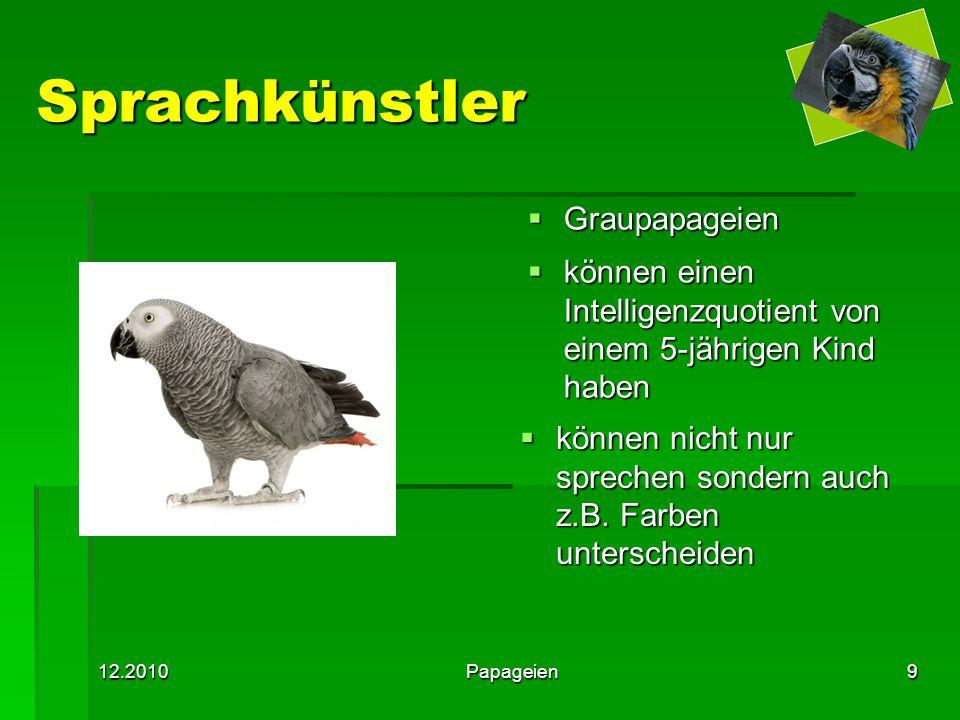 Sprachkünstler Graupapageien