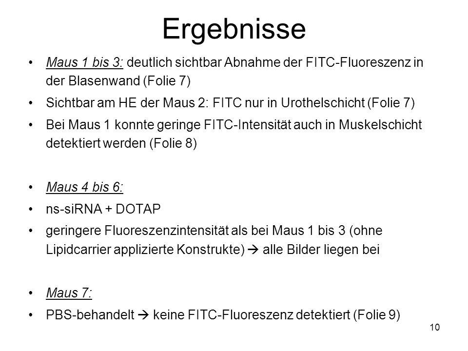 Ergebnisse Maus 1 bis 3: deutlich sichtbar Abnahme der FITC-Fluoreszenz in der Blasenwand (Folie 7)