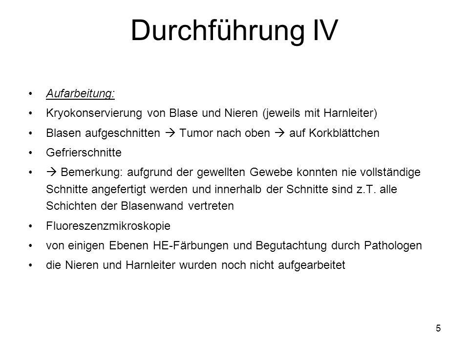 Durchführung IV Aufarbeitung: