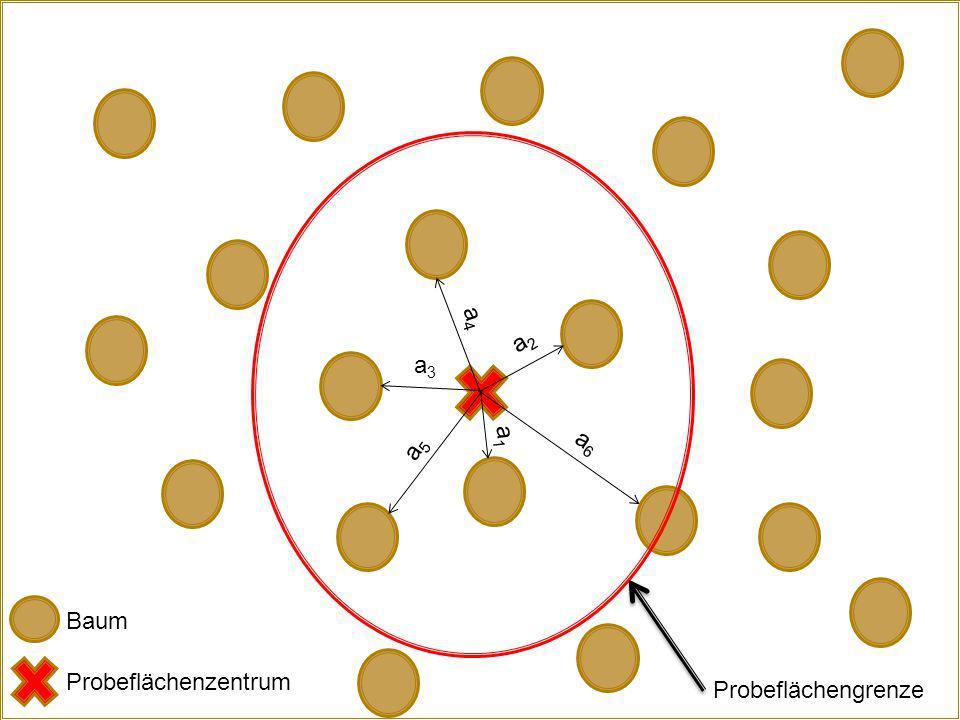 a4 a2 a3 a5 a6 a1 Baum Probeflächenzentrum Probeflächengrenze