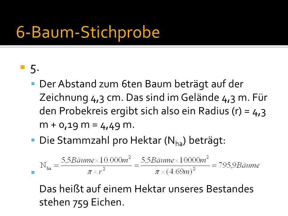 6-Baum-Stichprobe 5.