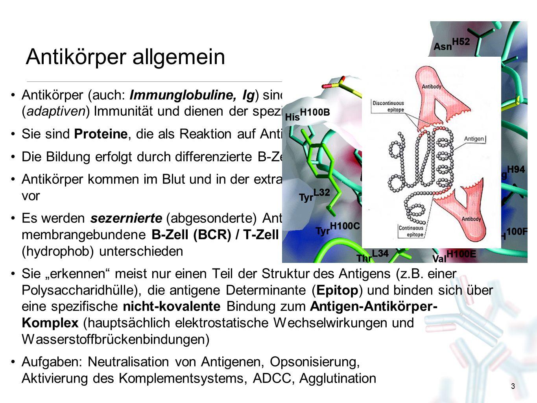 Antikörper allgemein