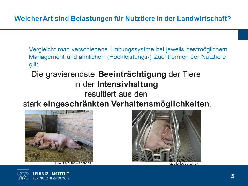 Welcher Art sind Belastungen für Nutztiere in der Landwirtschaft