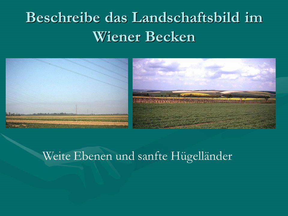 Beschreibe das Landschaftsbild im Wiener Becken
