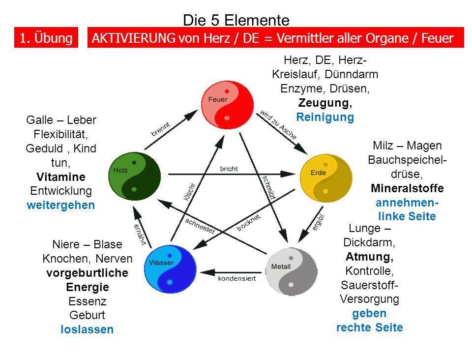Die 5 Elemente 1. Übung. AKTIVIERUNG von Herz / DE = Vermittler aller Organe / Feuer. Herz, DE, Herz-Kreislauf, Dünndarm Enzyme, Drüsen, Zeugung,