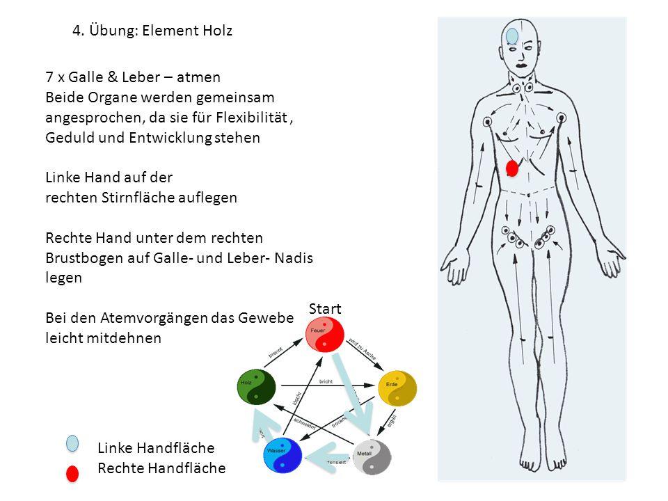 4. Übung: Element Holz 7 x Galle & Leber – atmen. Beide Organe werden gemeinsam angesprochen, da sie für Flexibilität ,