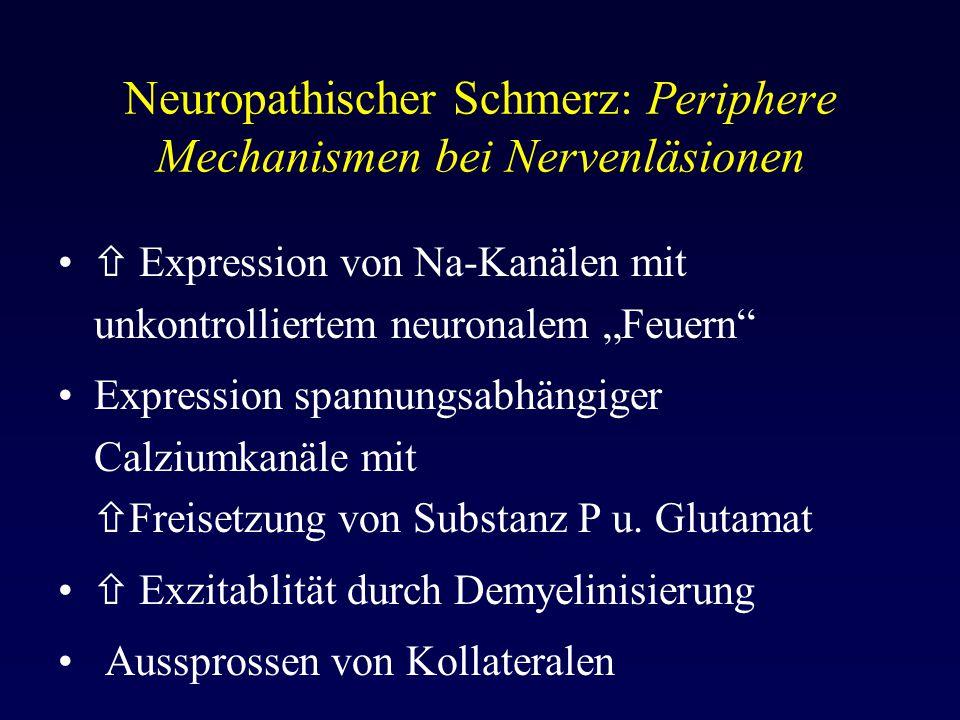 Neuropathischer Schmerz: Periphere Mechanismen bei Nervenläsionen
