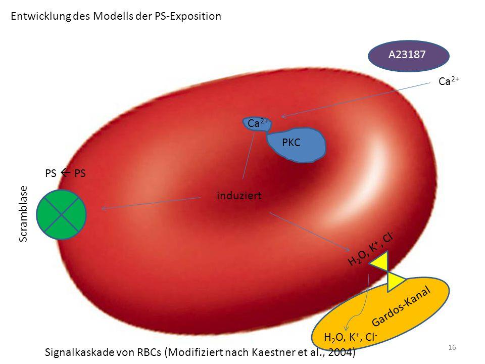 Entwicklung des Modells der PS-Exposition