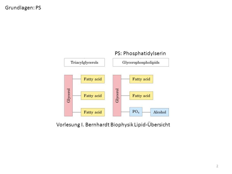 Grundlagen: PS PS: Phosphatidylserin Vorlesung I. Bernhardt Biophysik Lipid-Übersicht