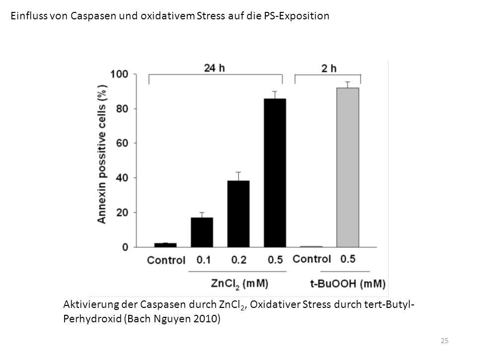 Einfluss von Caspasen und oxidativem Stress auf die PS-Exposition