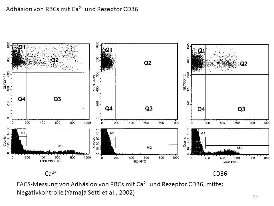 Adhäsion von RBCs mit Ca2+ und Rezeptor CD36