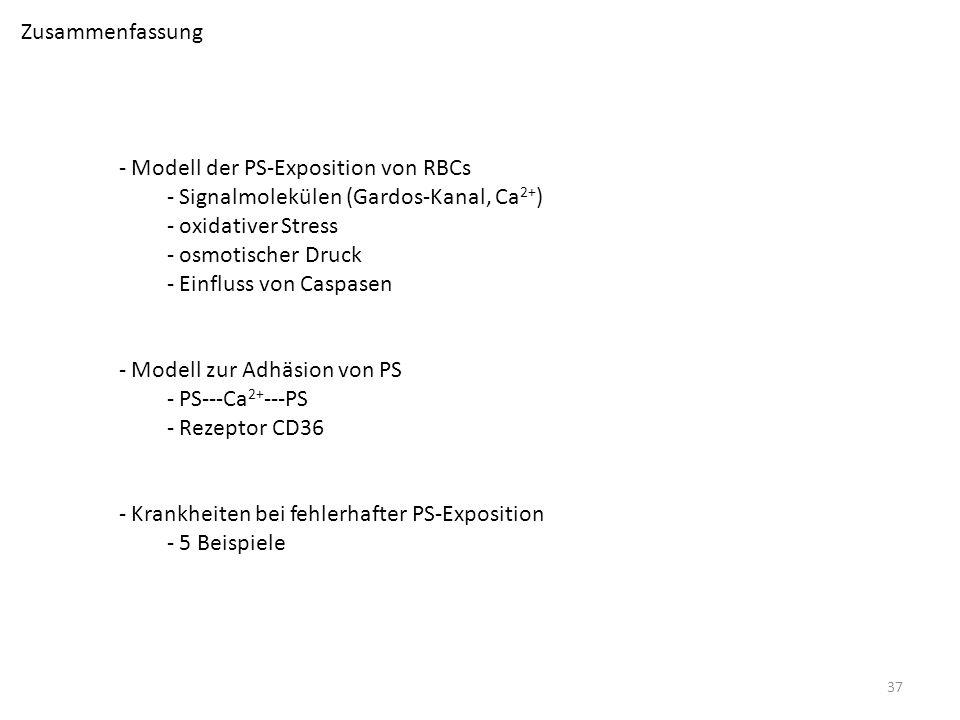 Zusammenfassung Modell der PS-Exposition von RBCs. Signalmolekülen (Gardos-Kanal, Ca2+) oxidativer Stress.