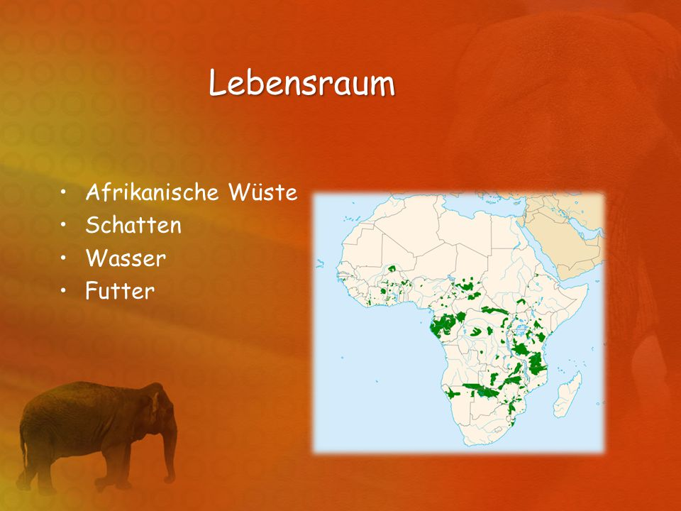 Lebensraum Afrikanische Wüste Schatten Wasser Futter