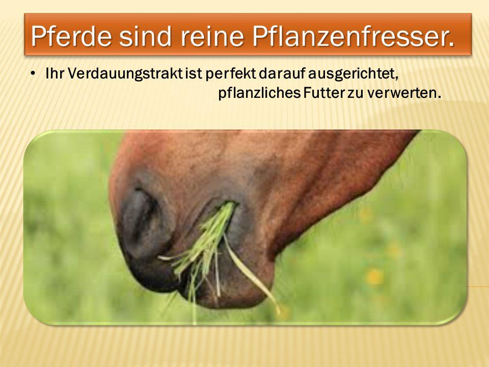 Pferde sind reine Pflanzenfresser.