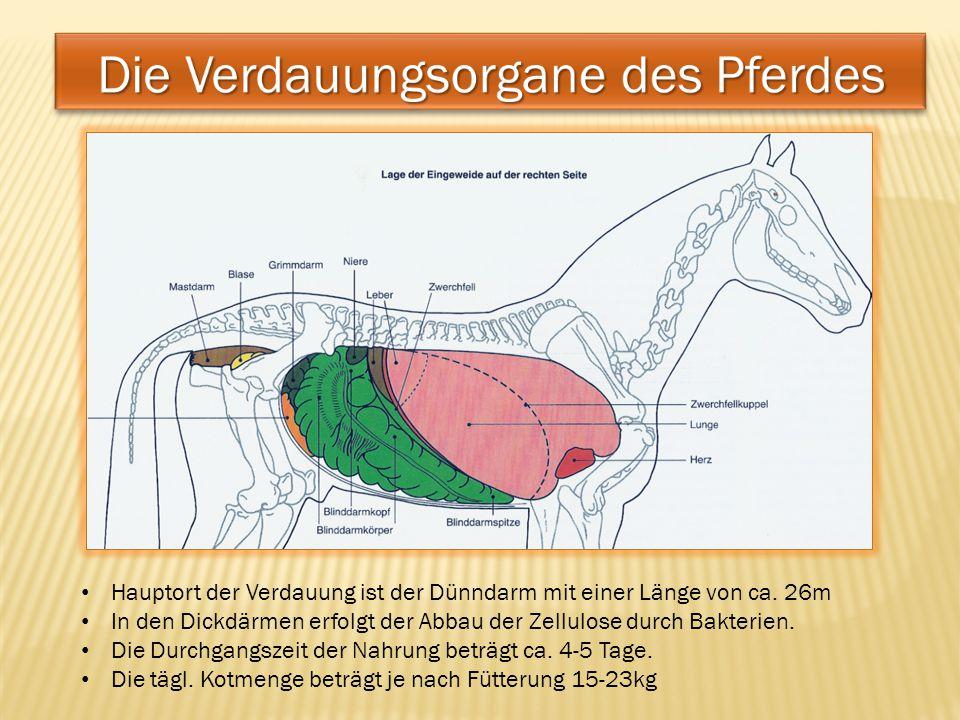 Die Verdauungsorgane des Pferdes