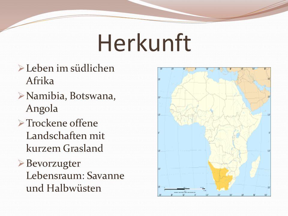 Herkunft Leben im südlichen Afrika Namibia, Botswana, Angola