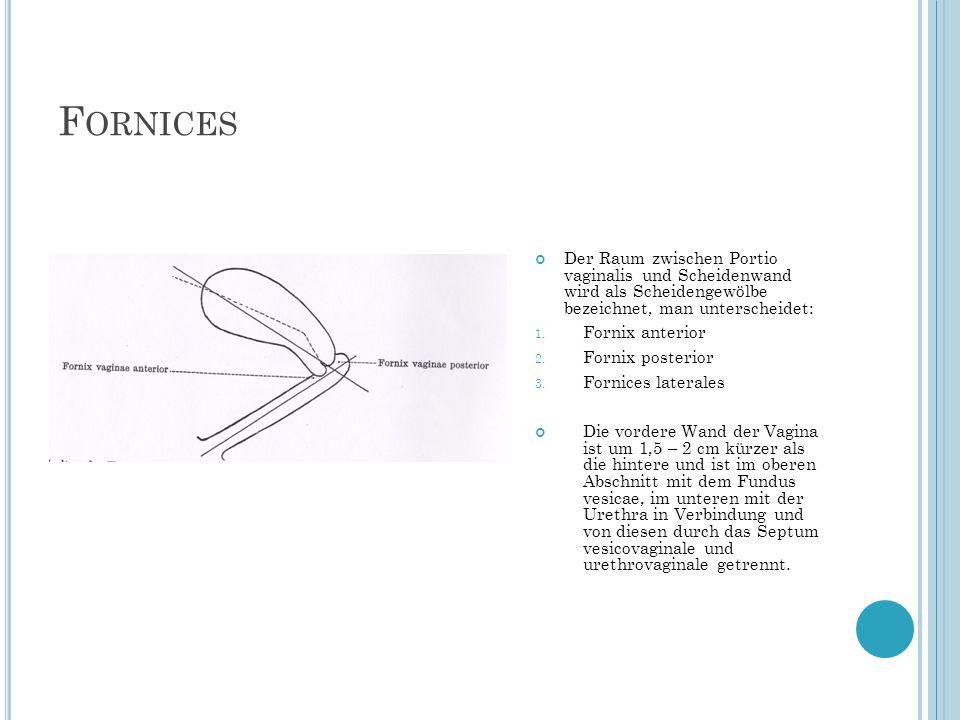Fornices Der Raum zwischen Portio vaginalis und Scheidenwand wird als Scheidengewölbe bezeichnet, man unterscheidet: