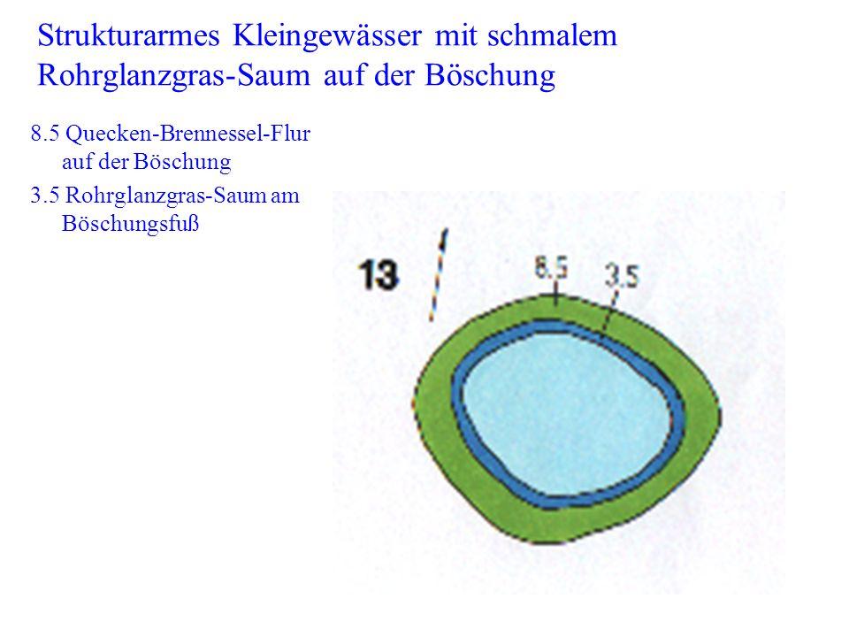 Strukturarmes Kleingewässer mit schmalem Rohrglanzgras-Saum auf der Böschung