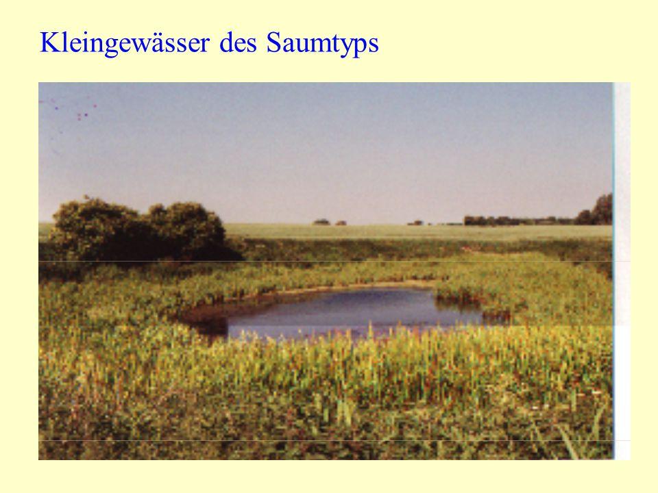 Kleingewässer des Saumtyps