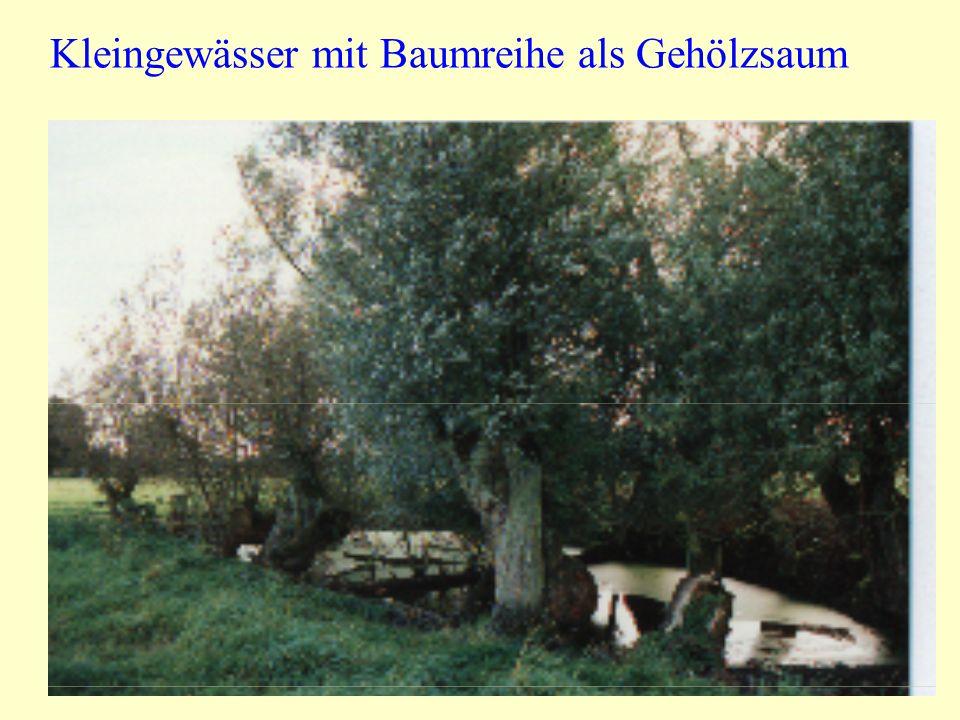 Kleingewässer mit Baumreihe als Gehölzsaum