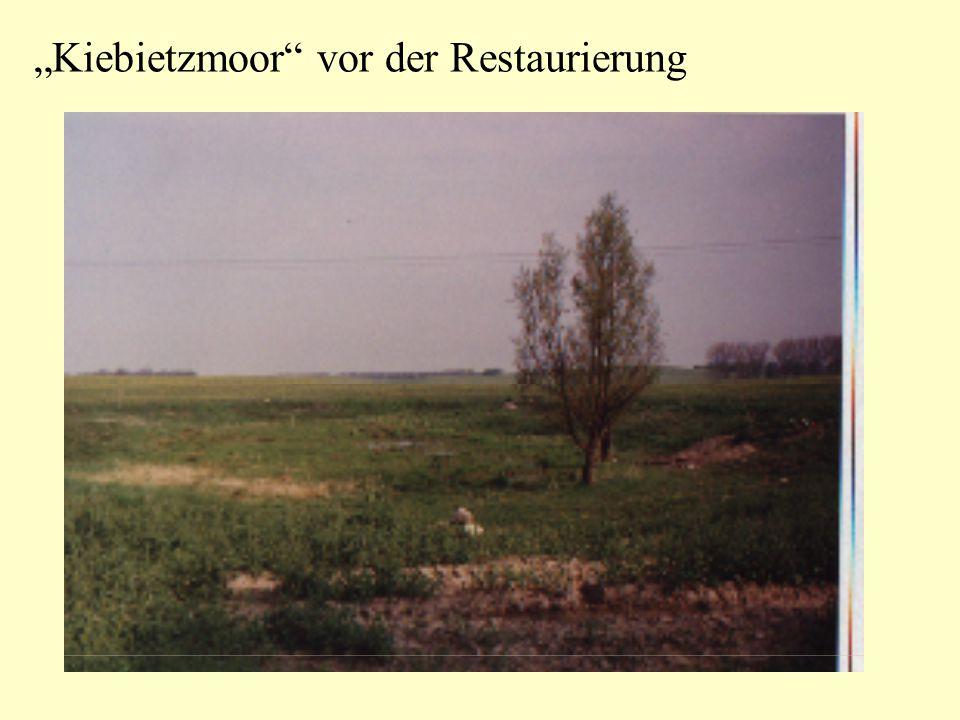 """""""Kiebietzmoor vor der Restaurierung"""