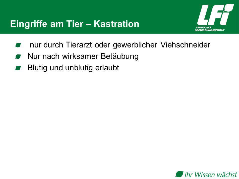 Eingriffe am Tier – Kastration