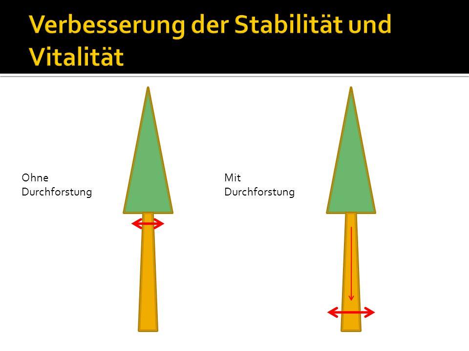 Verbesserung der Stabilität und Vitalität