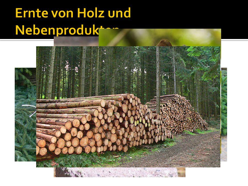 Ernte von Holz und Nebenprodukten