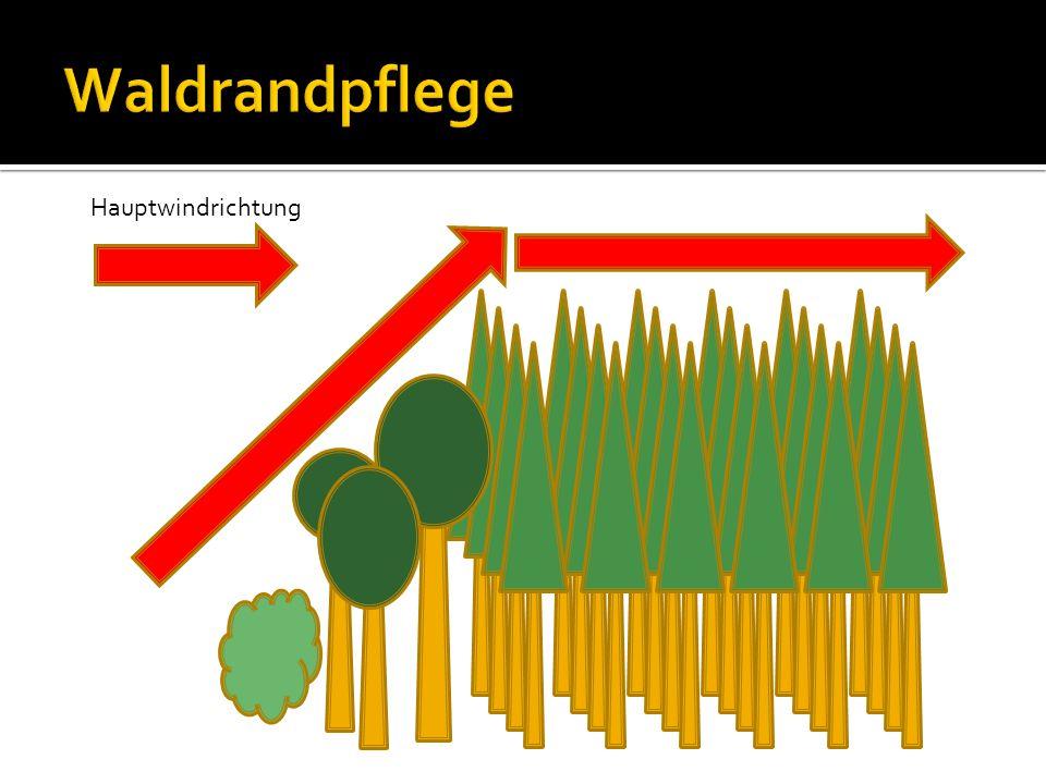 Waldrandpflege Hauptwindrichtung