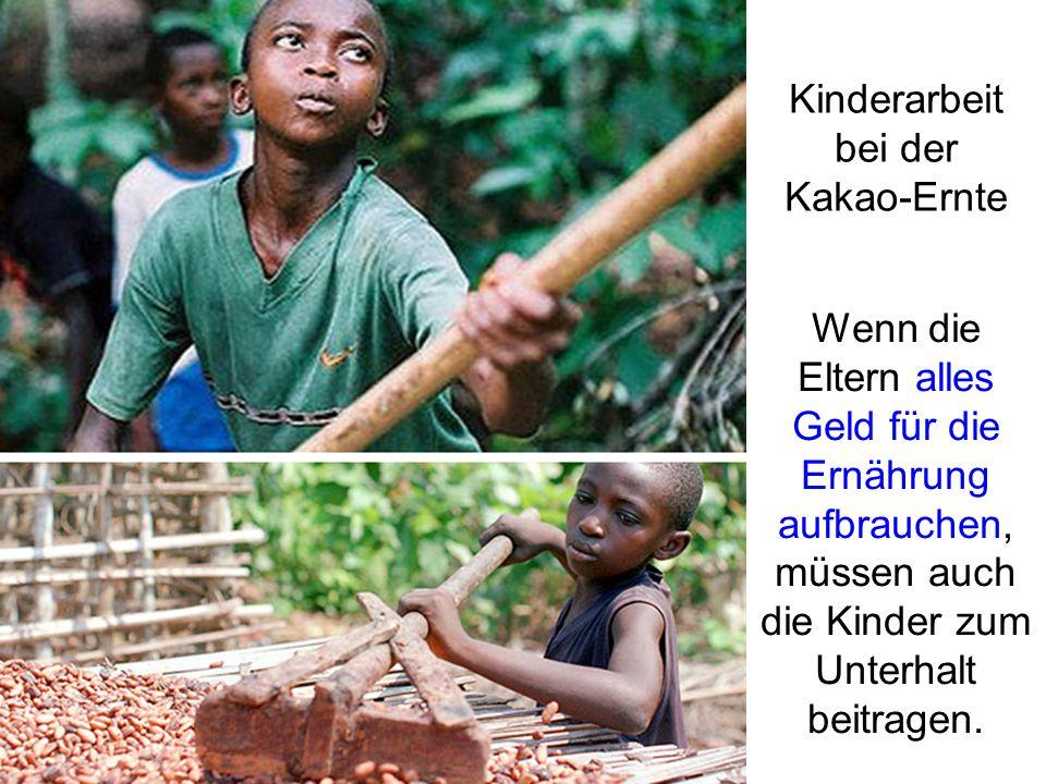 Kinderarbeit bei der Kakao-Ernte