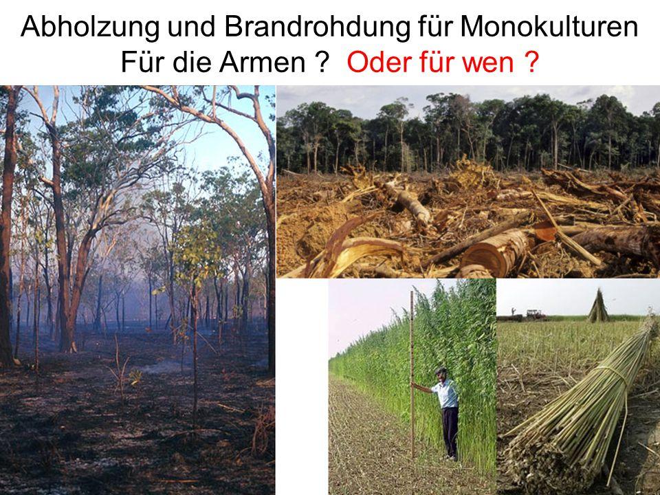 Abholzung und Brandrohdung für Monokulturen Für die Armen Oder für wen