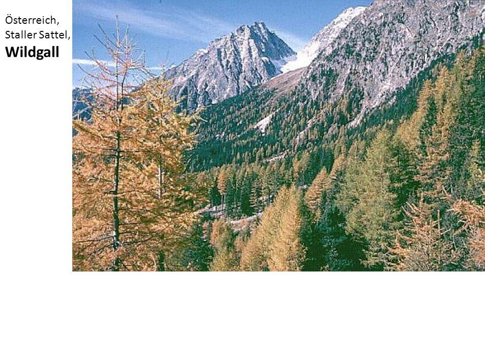 Österreich, Staller Sattel, Wildgall