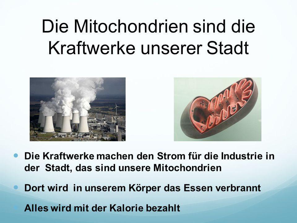 Die Mitochondrien sind die Kraftwerke unserer Stadt