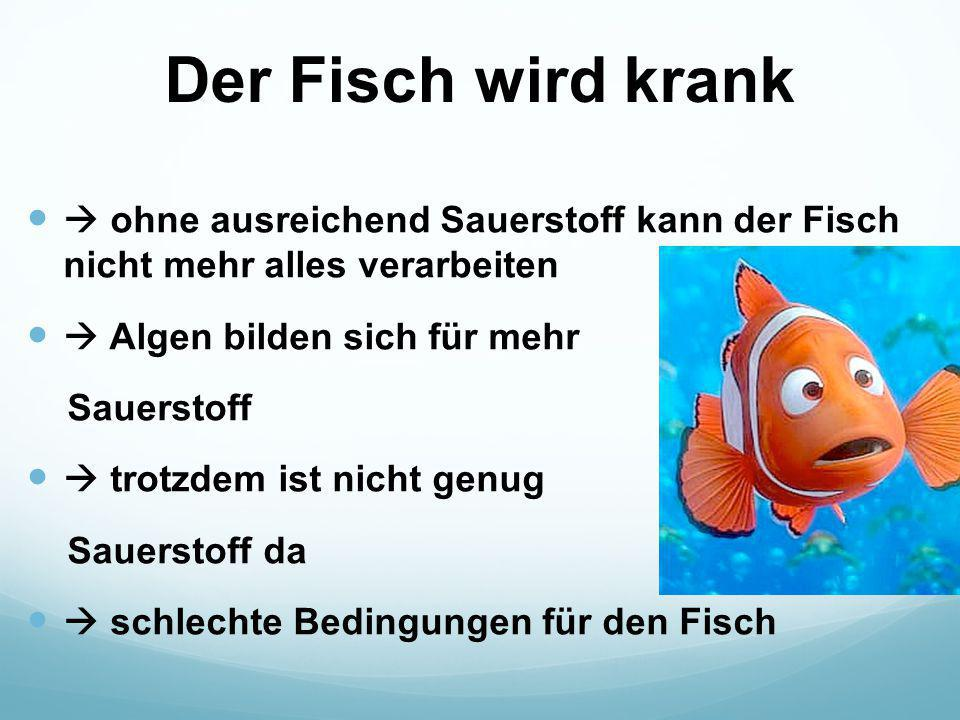 Der Fisch wird krank  ohne ausreichend Sauerstoff kann der Fisch nicht mehr alles verarbeiten.  Algen bilden sich für mehr.