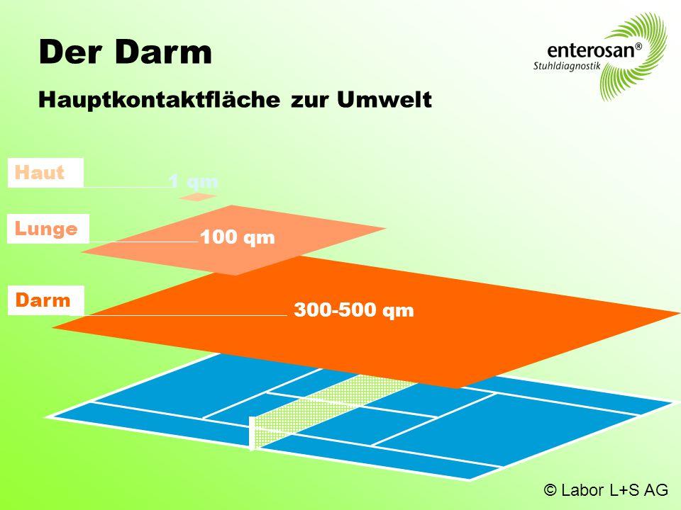 Der Darm Hauptkontaktfläche zur Umwelt Haut 1 qm Lunge 100 qm Darm
